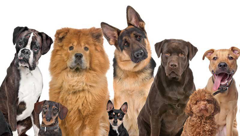 Какую собаку купить ребенку? Породы собак для детей